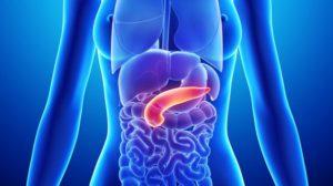 le pancréas et l'insuline régulent le taux du sucre dans le sang
